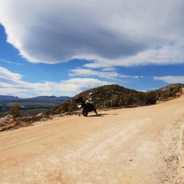 Hemel en Aarde Bike Trip – Day Trip